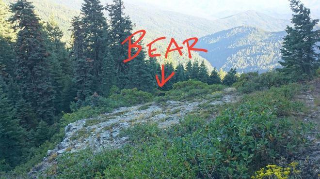 bearpic