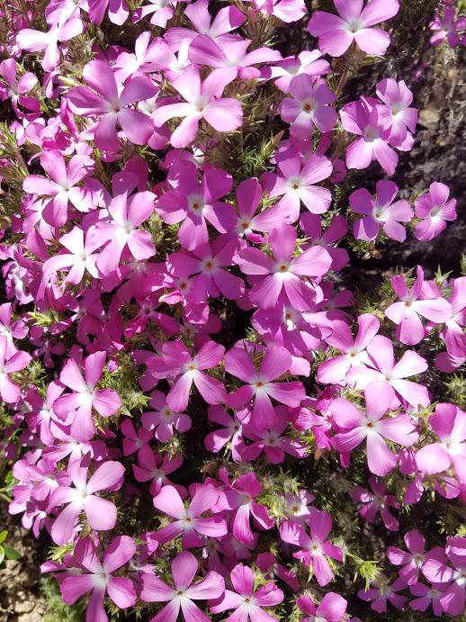flowersbloomingpct
